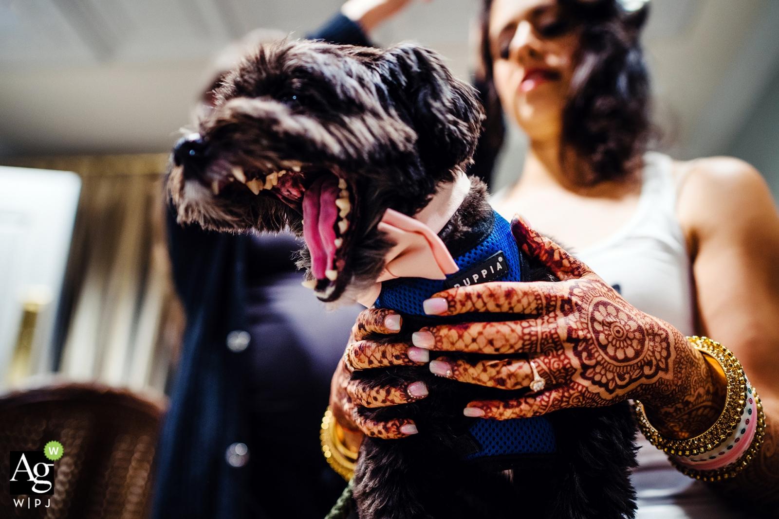 Photographie de mariage à New York | L'image contient: prise de vue en détail, chien, henné, se prépare
