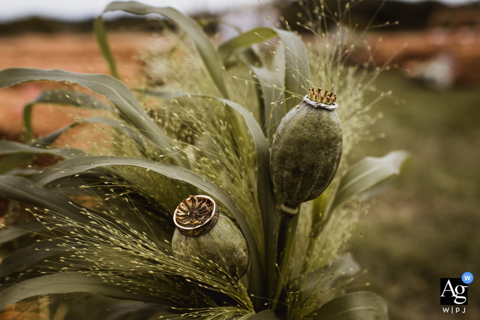在外面綠色植物的多西特藝術性的婚禮攝影圓環細節