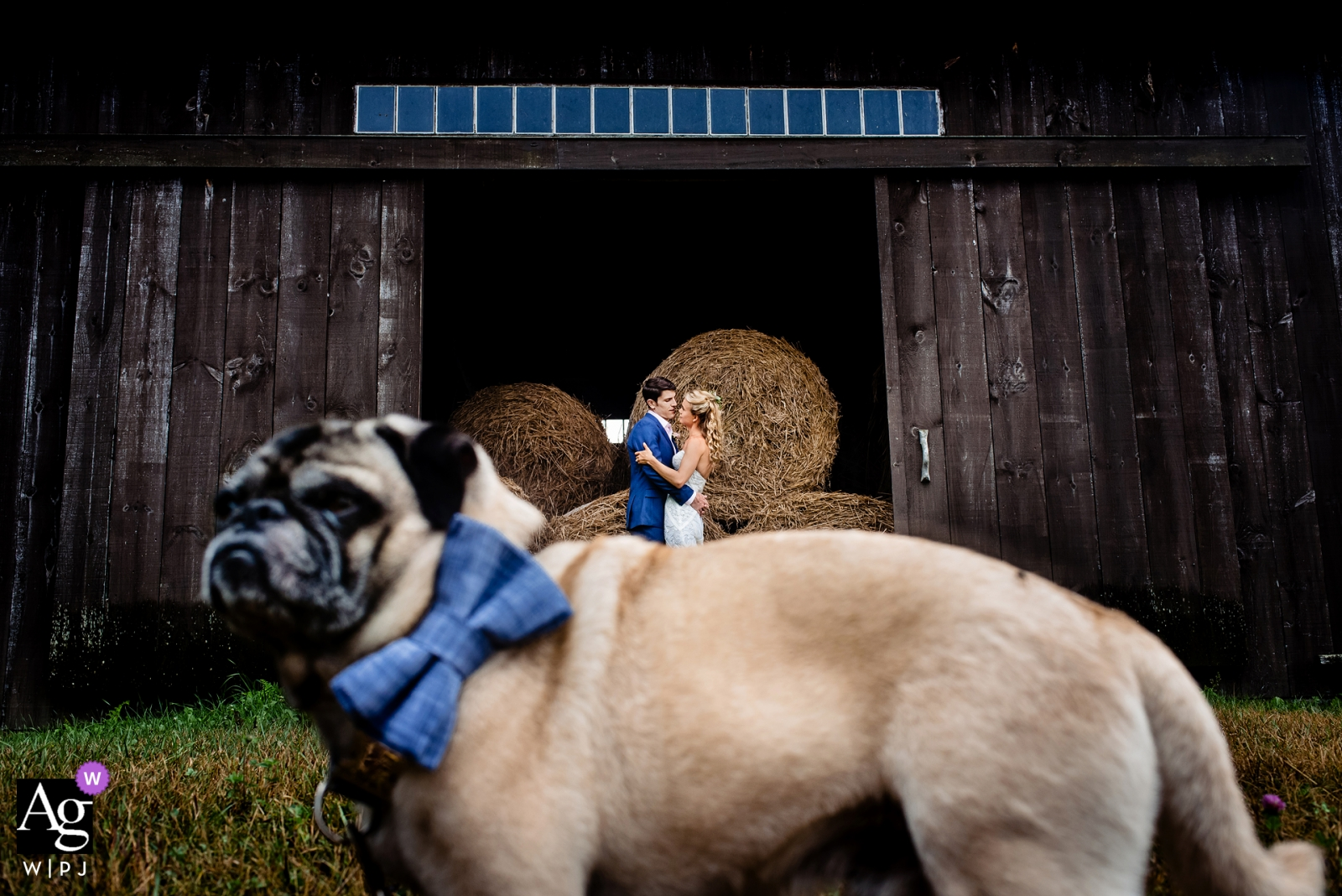 Vermont creative wedding day portrait session of couple by a barn, with a dog and a New England, RI, VT, MA, NH and CT wedding photography professional.