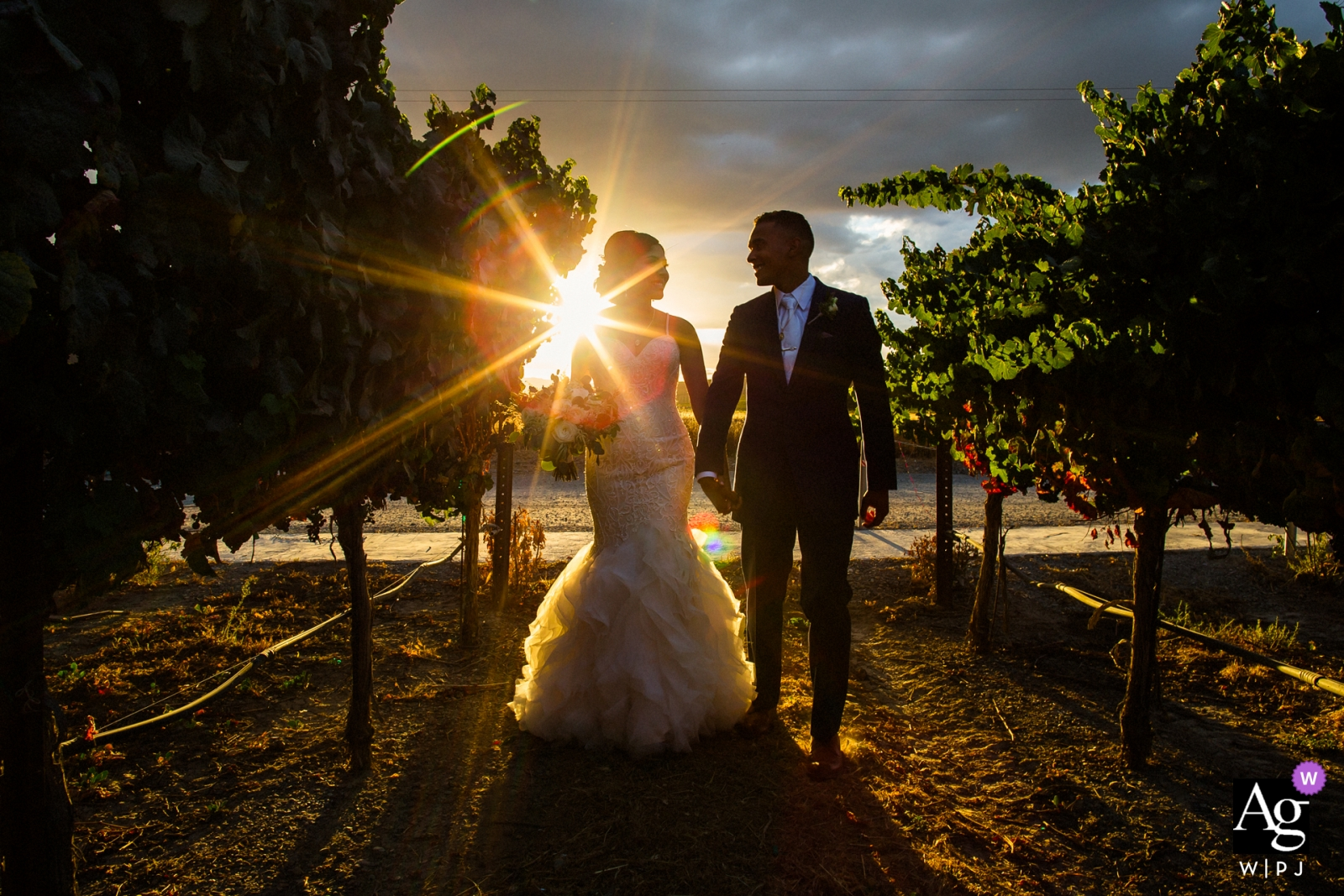 Fotografia di matrimonio da San Francisco, Ca | Giorno delle nozze Ritratto di camminare sposa e sposo al tramonto nel frutteto in fattoria