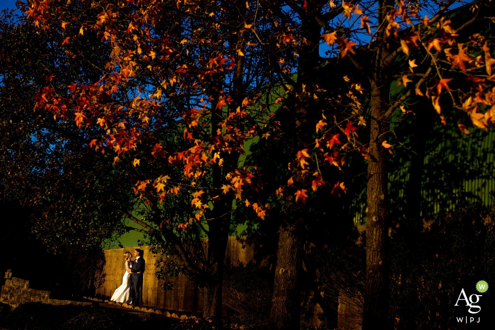 Portrait de mariage de l'Illinois portrait des mariés de Chicago