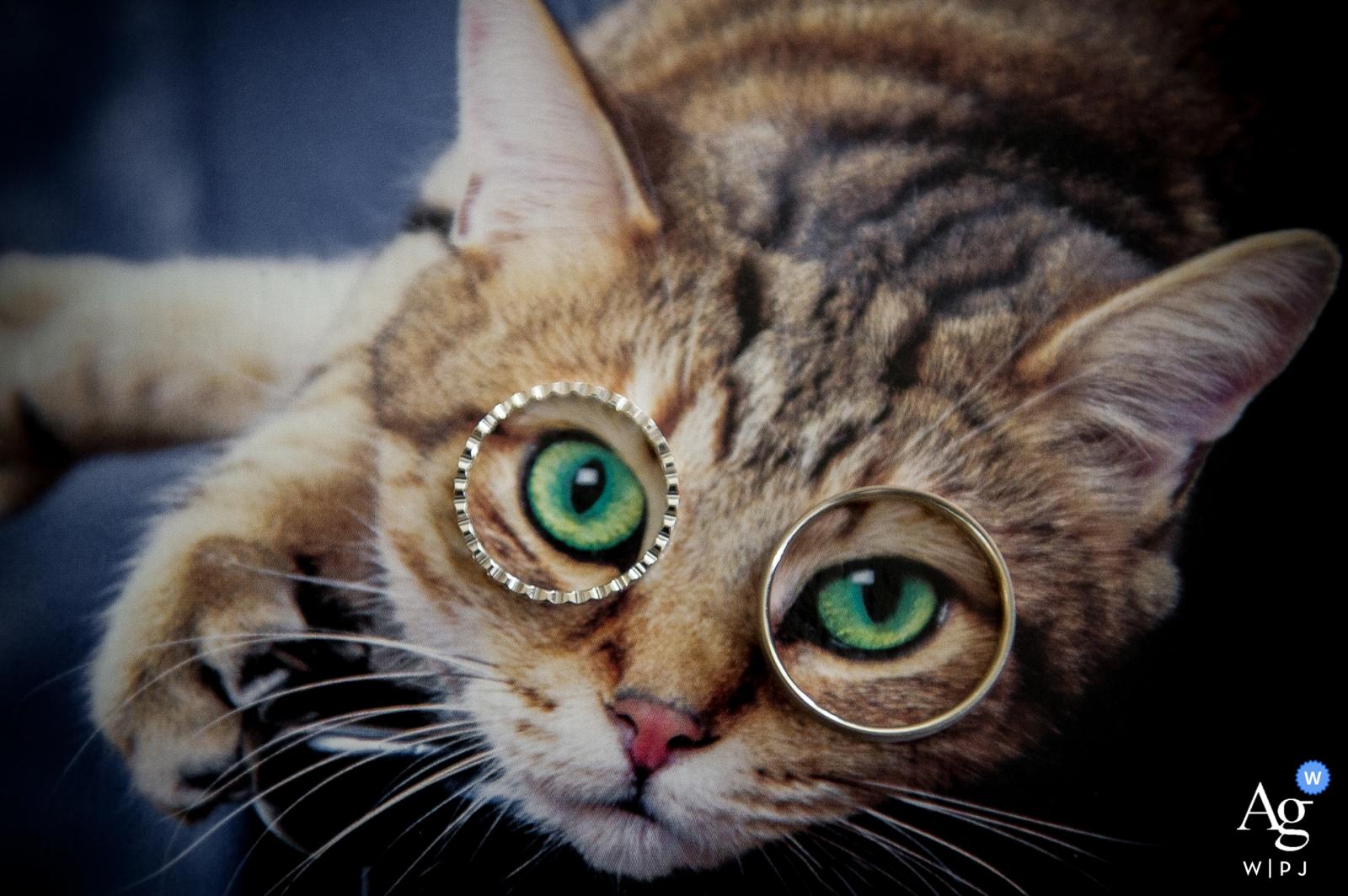 Oise artistiek creatief fotografiedetail van trouwringen op beeld van kat