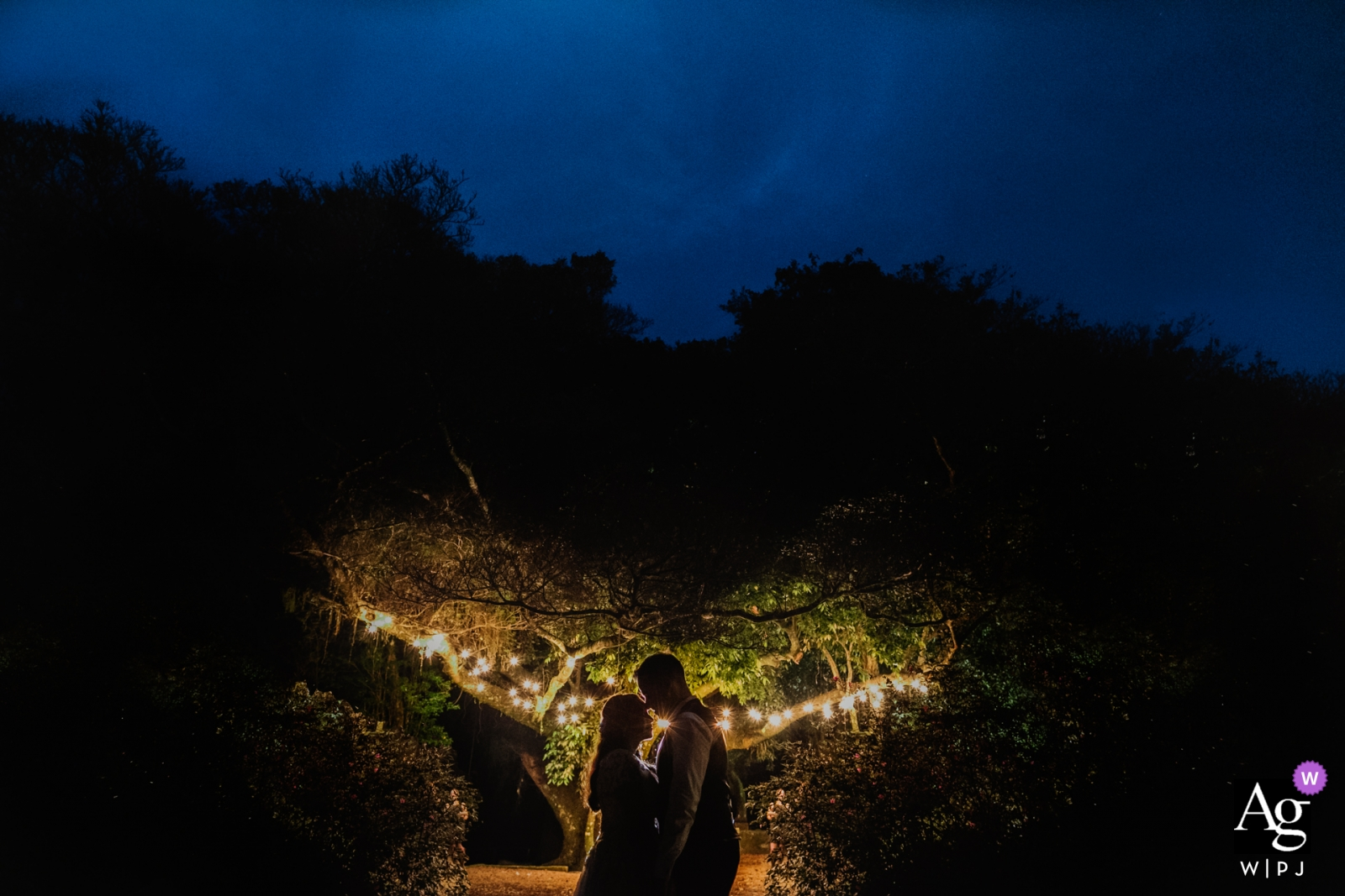 Casa da Figueira - Porto Alegre - Rio Grande do Sul - Brasil wedding portrait photographer | bride and groom with a tree in the background