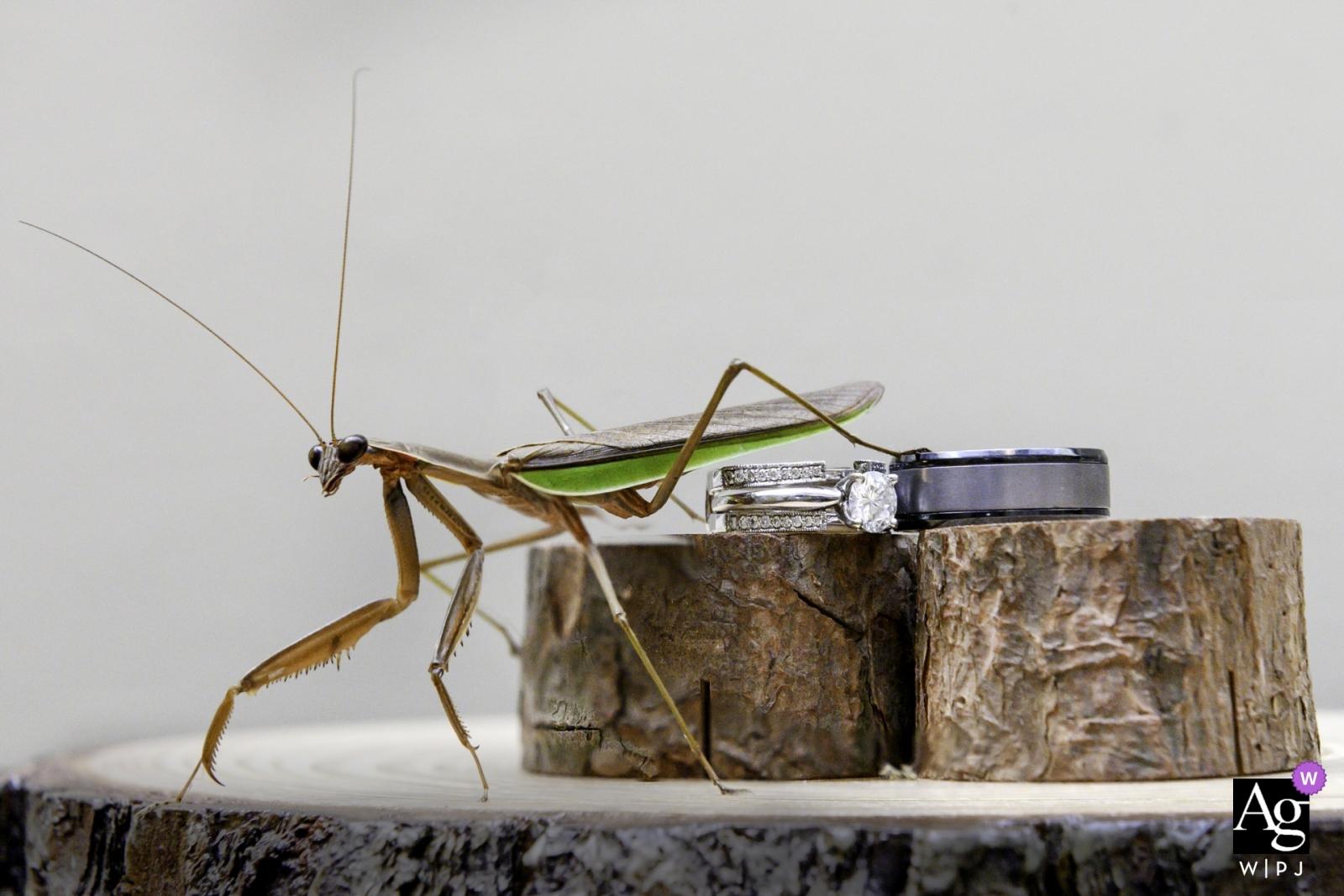 Ring shot at a wedding in upstate NY with a praying mantis