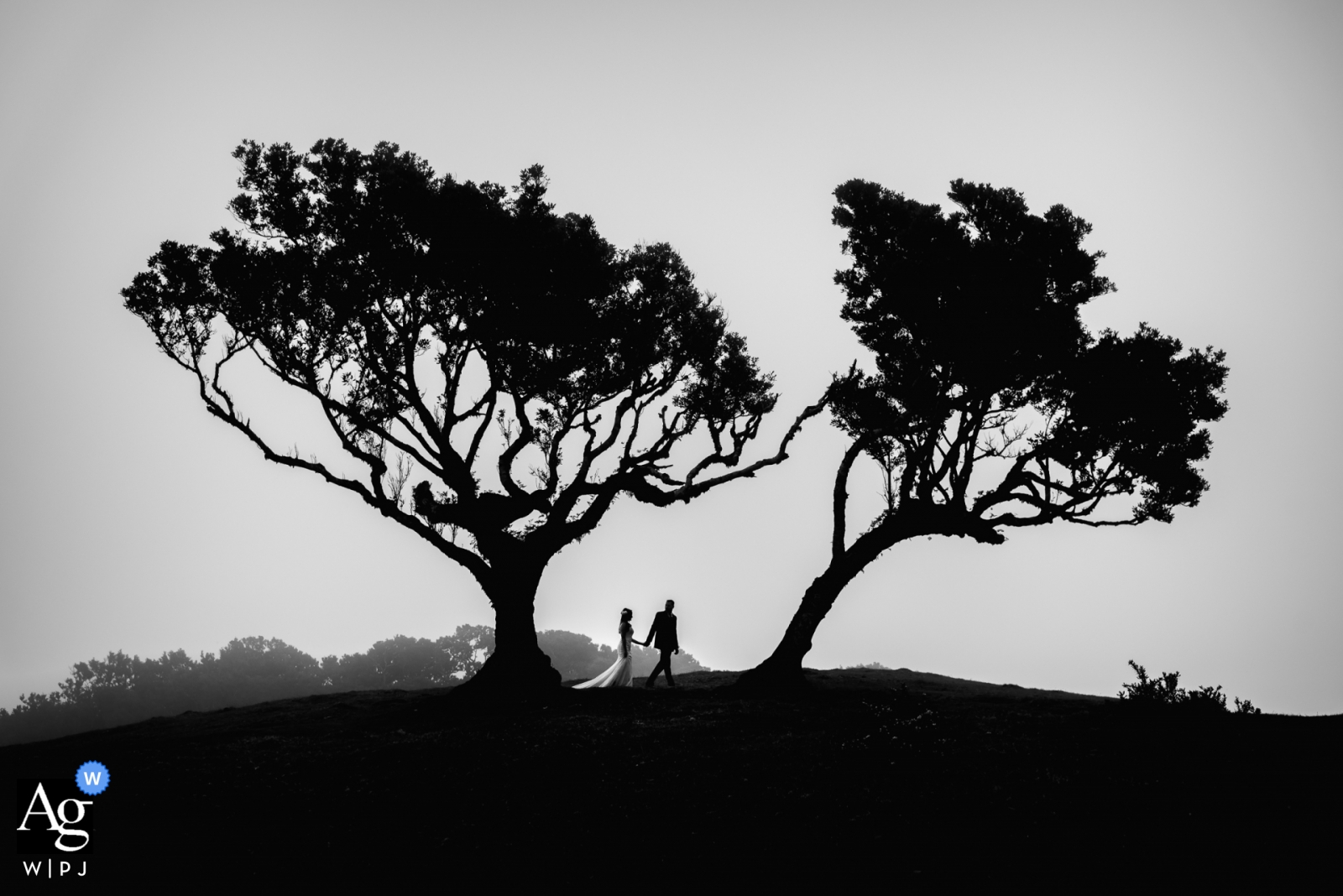 Der Hochzeitsfotograf von Madeira macht ein Foto von Braut und Bräutigam auf den Feldern in der Nähe des Hochzeitsempfangs