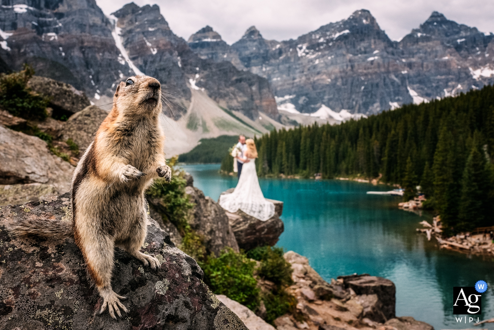 Moraine Lake, AB, Canada wedding portrait of a friendly ground squirrel posing in frond of the bride and groom