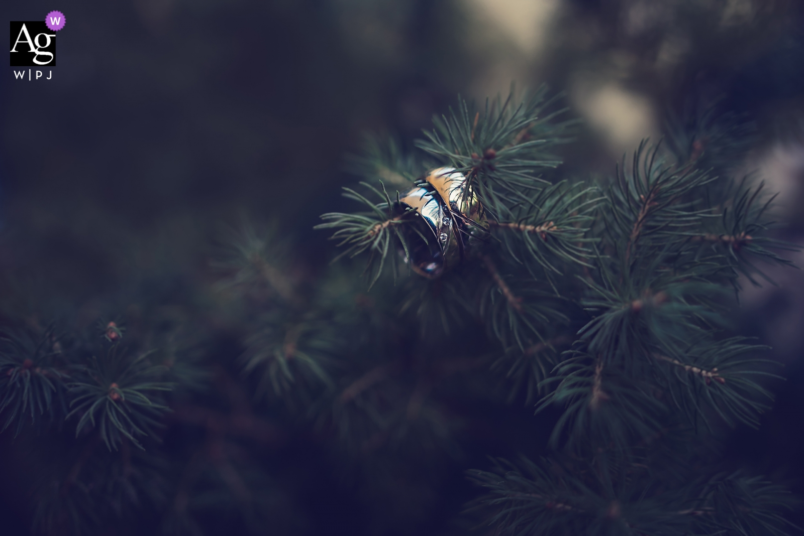 Bulgaria bride details of the rings in a tree | Infinity fine art wedding photography