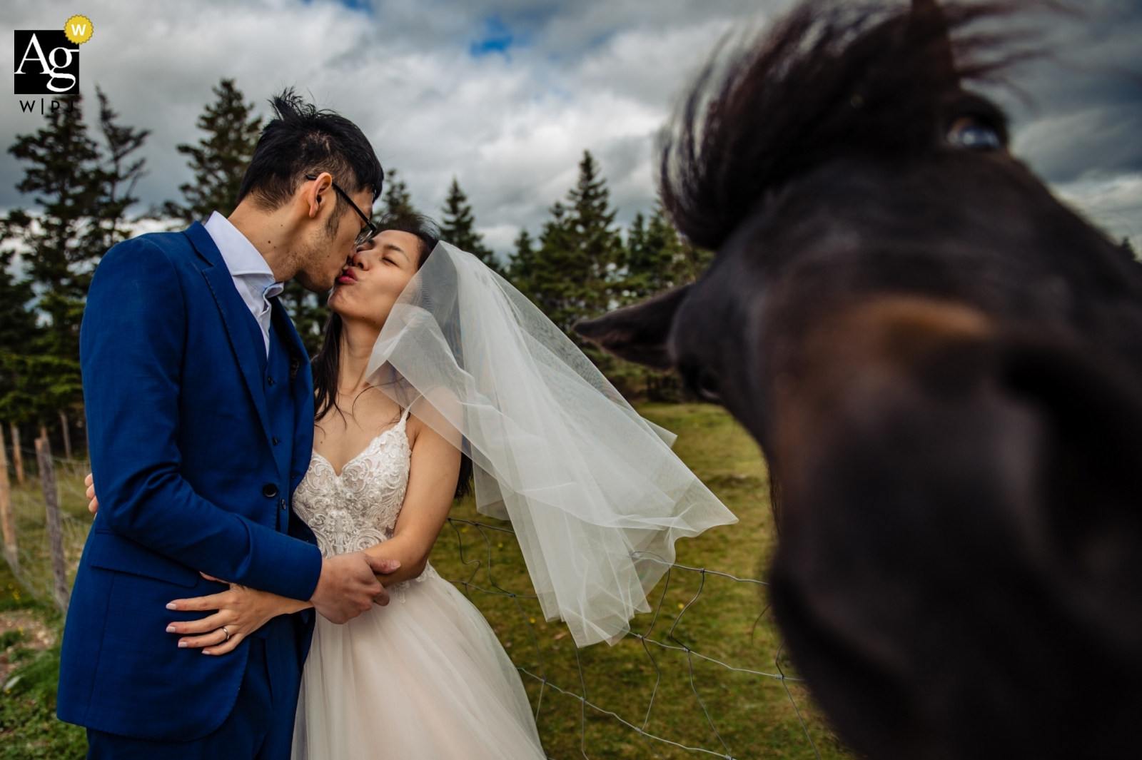 Doctors House - Newfoundland | Bride and groom get Photobombed during portrait session near a horse