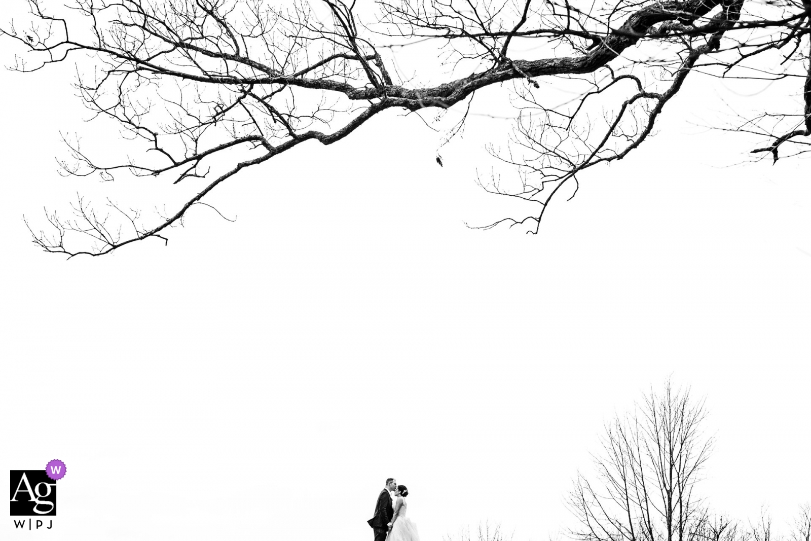 New Jersey black and white portrait of the bride and groom under a tree