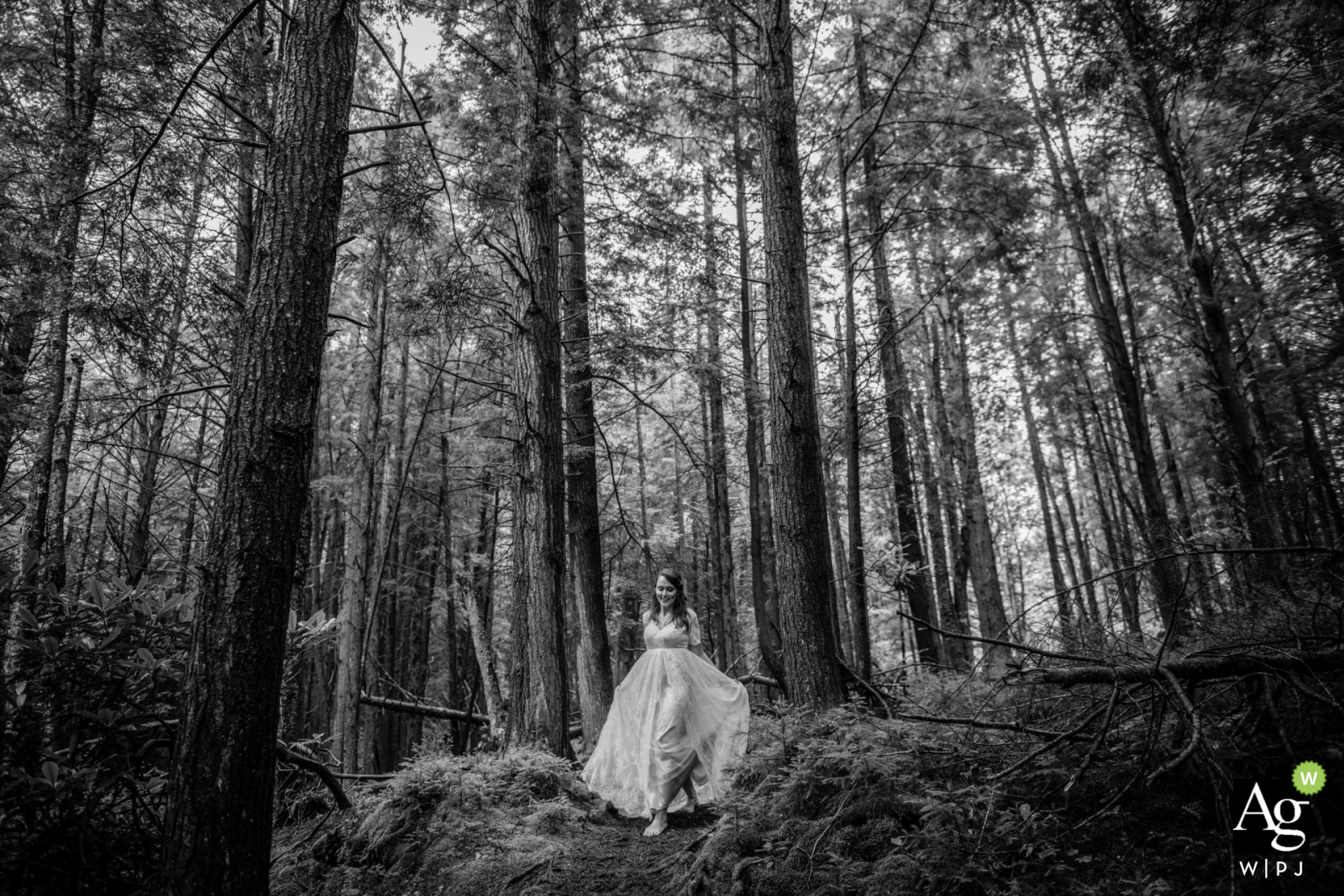 Black Falls, WV wedding bride posing for a portrait in the tall trees of the wooded forest