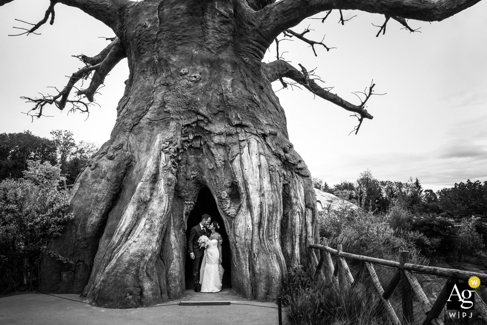 Zurigo wedding portrait captured under a giant tree