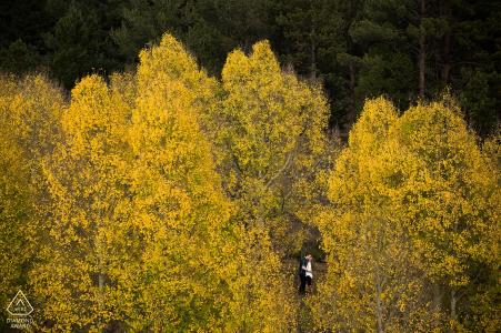 Photographe de fiançailles des Rockies du Colorado. Vue aérienne du couple élevé dans les arbres jaunes.