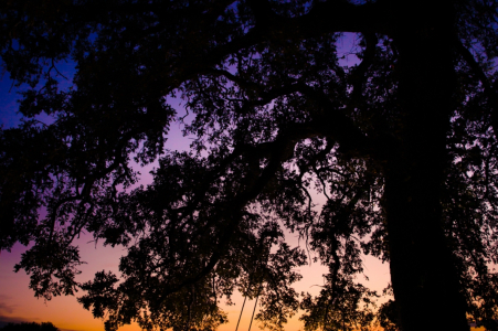 Whitehall Polley Mansion Engagement Photo Session | Swinging under the oak trees during sunset