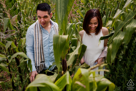 an engaged couple is Walking through the corn files in Cuscco during their portrait photoshoot
