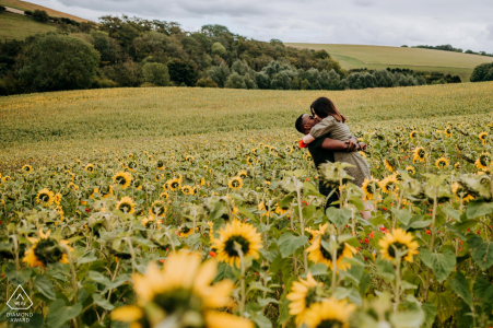 Sun Flower field outside Hull, East Yorkshire engagement shoot in a sun flower field with lots of love and fun