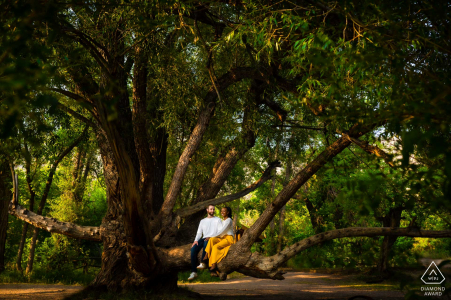 The couple sits in a tree during their engagement session at Lair o' the Bear Park in Idledale, CO