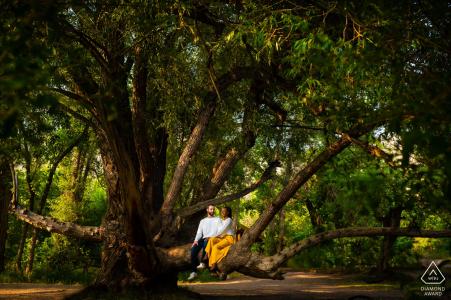 Le couple est assis dans un arbre au cours de leur session de fiançailles à Lair o 'the Bear Park à Idledale, CO