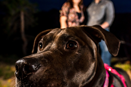 Portrait d'engagement de Boulder avec un couple posé à Walker Ranch, CO alors que leur photo de chien bombarde leur portrait