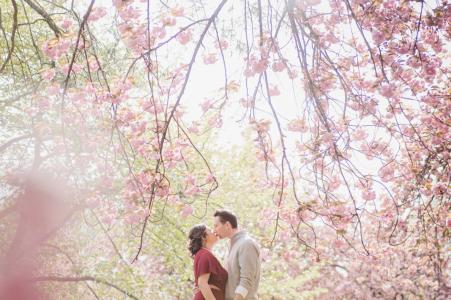 Central Park, NYC Photoshoot avant le mariage avec un baiser sous un cerisier en fleurs