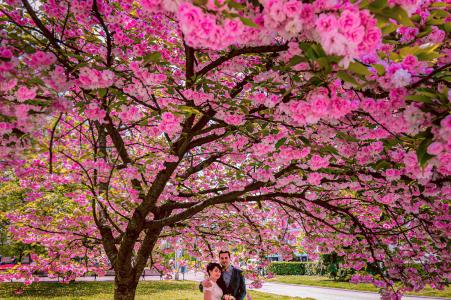 Sesión electrónica de compromiso medioambiental de Sofía de una pareja bajo un árbol en flor
