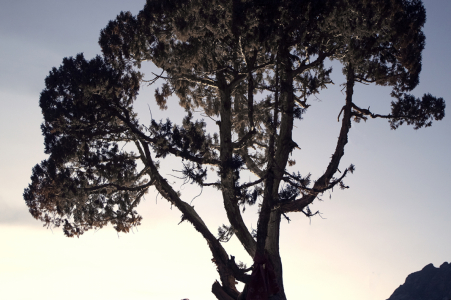 E-session d'engagement environnemental Delingha sous un arbre immense avec de superbes silhouettes