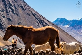 Brazil Engagement Photo session in the mountains with wild horses.