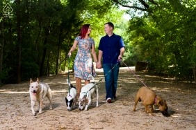 Central Texas engaged couple walking 4 dogs on leashes in the park during their portrait session
