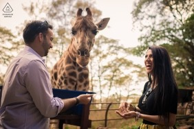 Maharashtra engagement portrait session with a giraffe and a couple laughing