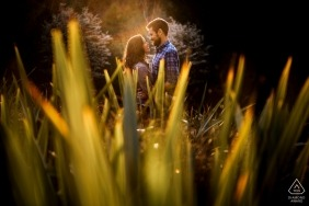 pre-wedding engagement shoot in tall grass with good light   Seattle, Washington portraits