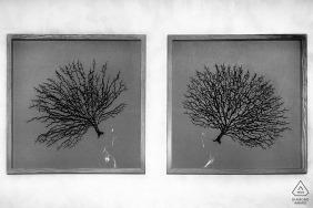 Dubai amor árbol con pareja | Pre Fotógrafo de Compromiso de Boda
