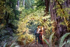 Muir Woods National Monument   Engagement Portrait of couple in the woods
