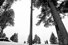 公寓,西湖太浩湖| 在天空和雪和树木的订婚Portraint