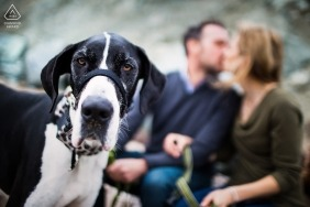 The Dog's expression says it all! - California Engagement Photographs