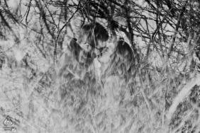 Während eines Fotoshoots mit einem Fotografen aus Morbihan, Birttany, kann man ein Paar sehen, das sich durch Zweige küsst.