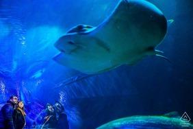Un couple se tient ensemble à l'aquarium de San Francisco alors qu'ils observent une grande galuchat lors d'une séance photo précédant leur mariage par un photographe de Sao Paulo, au Brésil.