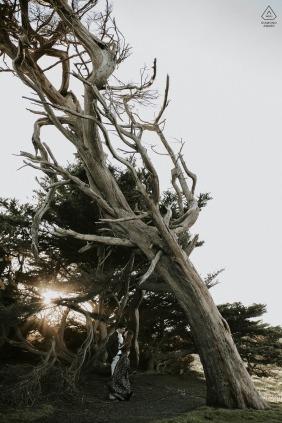 Bodega Bay, CA Sessão de fotos antes do casamento com um casal e uma árvore alta.