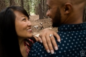 Dogs in background of enagaged couple with ring   Forest in Alta, California