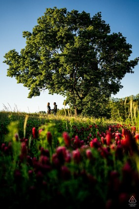 Ivančice engaged Couple posing for portraits under the branches of mighty tree