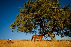 San Martin, California portraits of an engaged couple having a Picnic on the hillside with a horse and a big tree