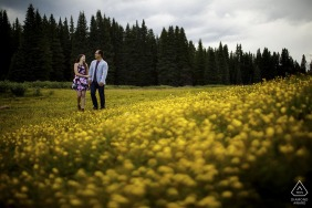 The engaged couple walk near a grove of yellow wild flowers during their engagement shoot in the Shrine Pass
