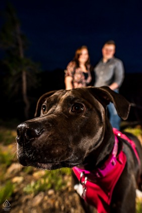 Boulder engagement portrait with a posed coupleat Walker Ranch, CO as their dog photo bombs their portrait