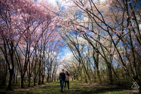 The National Arboretum in Washington DC Artful Engagement Picture created as The couple is walking in a field filled with cherry trees