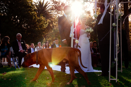 Buitenver Wachting outdoor wedding image in the afternoon sun with a dog walking past the altar by the bride and groom