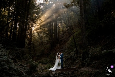 Saratoga Springs Wedding | California Forest Wedding Portrait