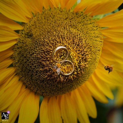 Calabria wedding detail shot of rings and bee on a sunflower