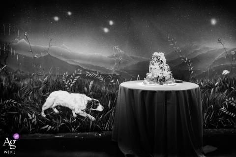 Northamptonshire artistiek creatief fotografiedetail van cake met muurschildering op muur van platteland en hond
