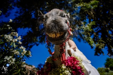 Athens artistic creative photography detail of horse at traditional wedding ceremony