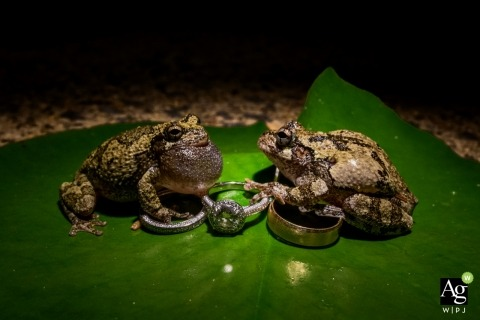 Arlington Wedding Photographer | Image contains: detail shot, rings, frogs, leaf
