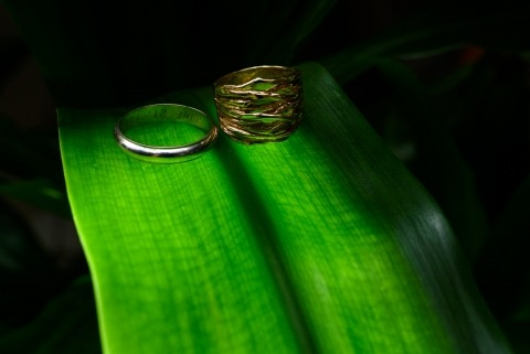 Close up of rings on green leaves