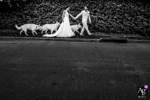 creative and artistic wedding pictures by Leon photographer of bride and groom walking their dogs